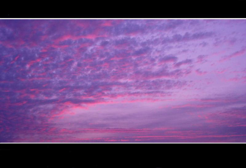 -purple heaven-