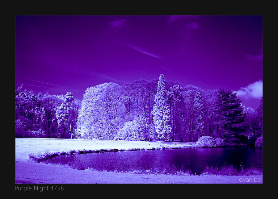 Purple Night 4758