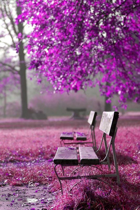 purple park