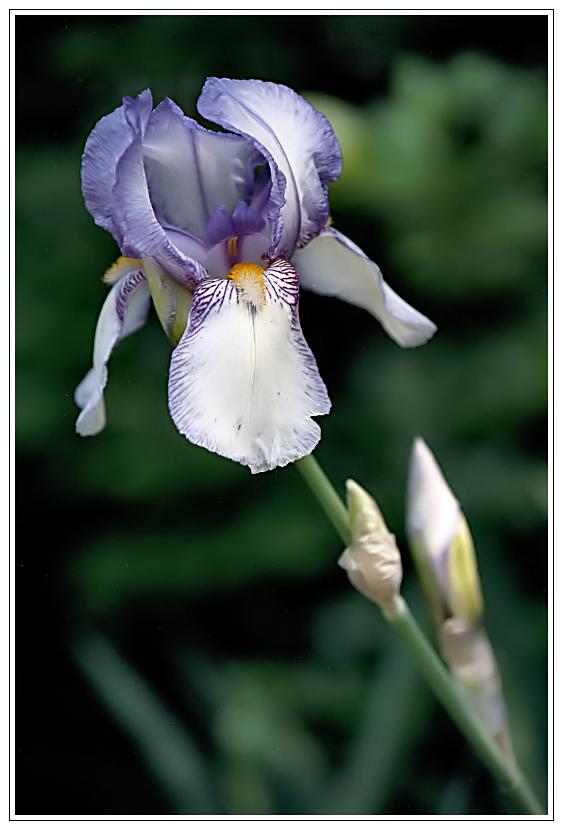 purple secrets
