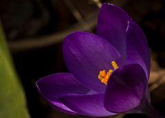 purple surronding yellow