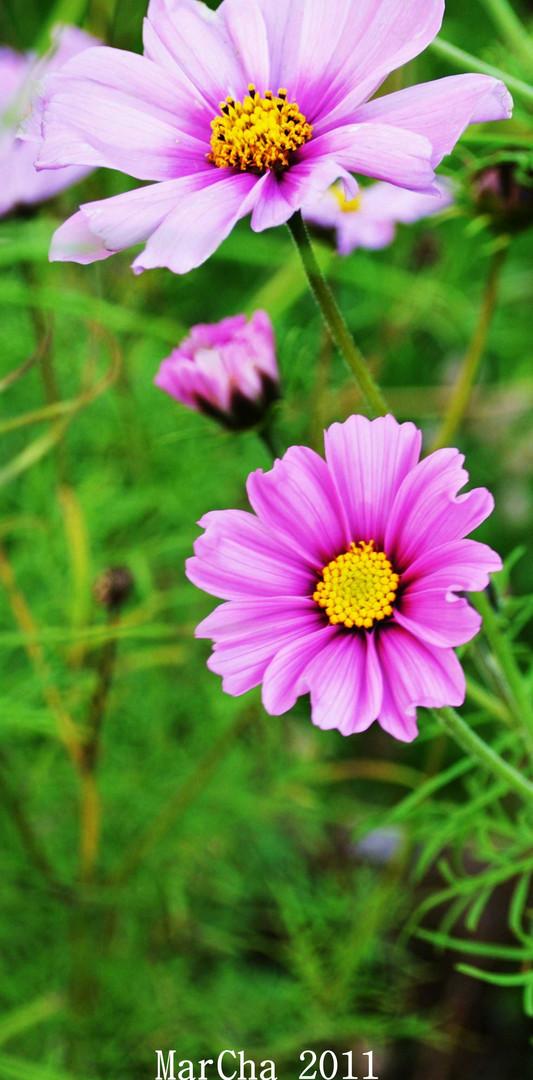 PurpleAutumn