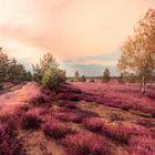 Purpur Land