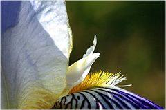 Puschelhäarchen
