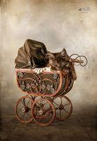 pussy on wheels.