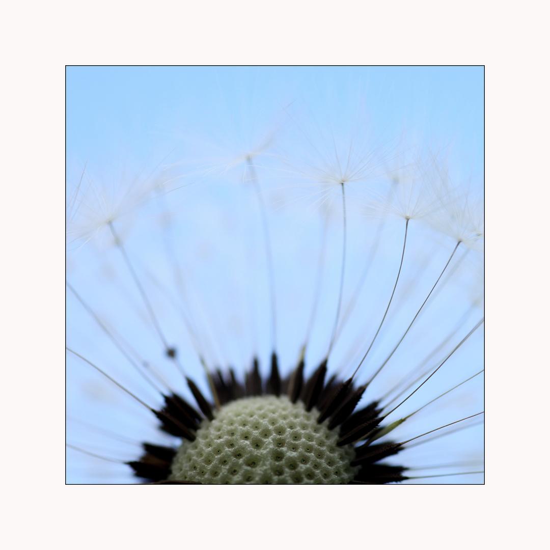 Puste-Blume 2
