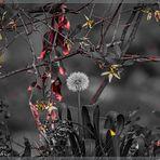 Pusteblümchen