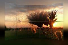 Pusteblume in der Abendsonne