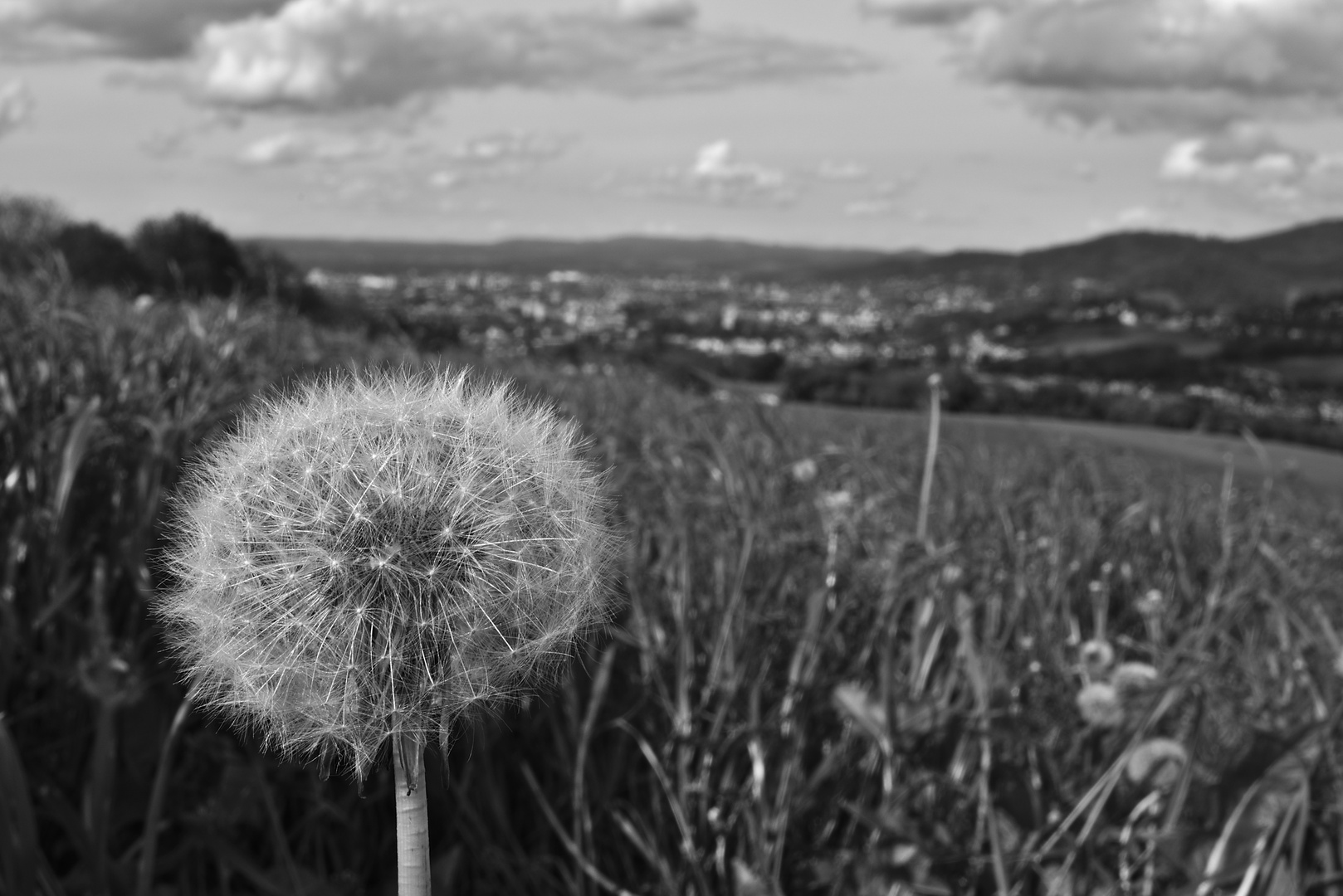 """Pusteblume"" über Freiburg"