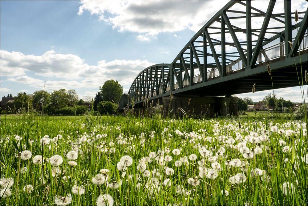 Pusteblumenbrücke...
