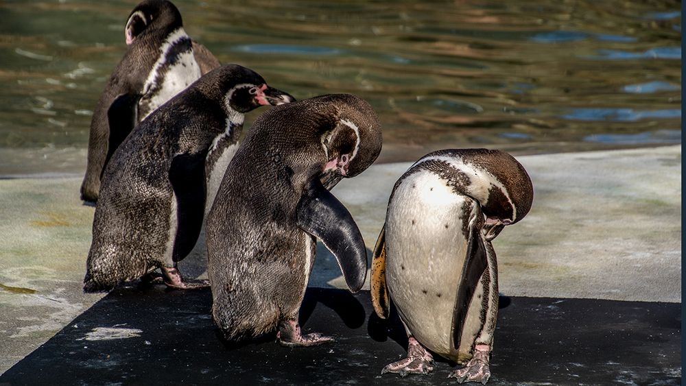 Putztag bei den Pinguinen