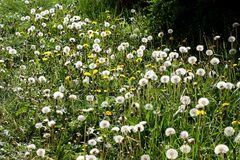 Puuuuste - Blumenparadies