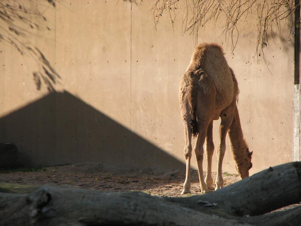 Pyramide im Zoo