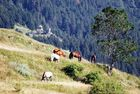 Pyrénées Orientales - suite