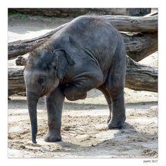 Qigong für Elefanten...