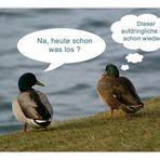 Quack - Quatsch