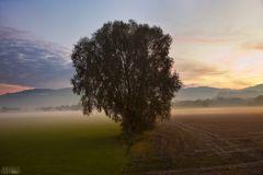 Quadrantenbaum
