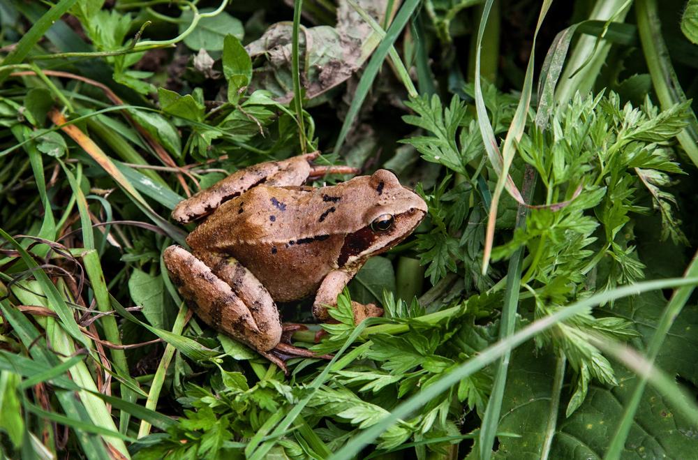 Quak machte der Frosch und hüpfte mir vor die Füße!
