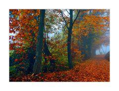 Quale sensazione ti trasmette l' arrivo dell' autunno?