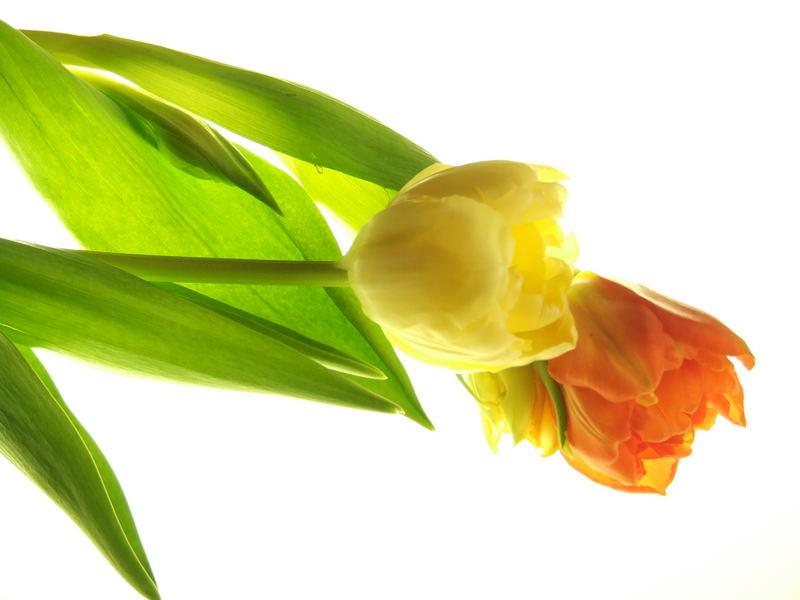 Quand les fleurs s'aiment...