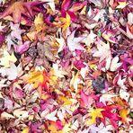 Quando l'autunno con i tacchi lunghi....