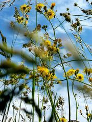 ...quando le formiche guardano il cielo...