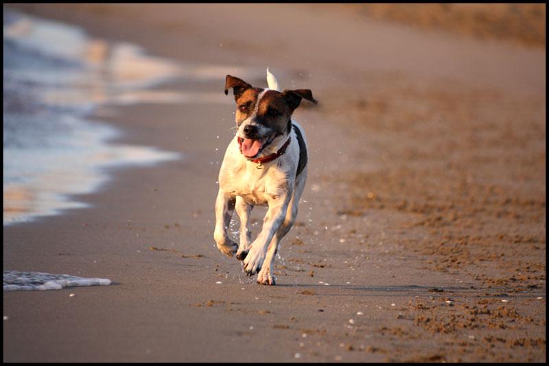 Quanto ci piace la spiaggia all'alba..