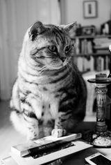 Quax hat den Überblick auf dem Tisch ;-)