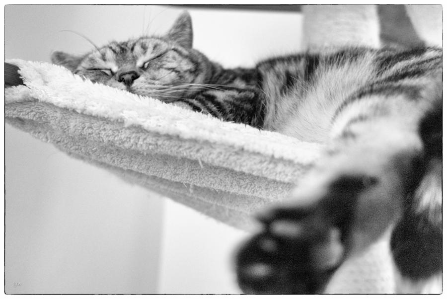 Quax wünscht eine entspannte Nacht ;-)