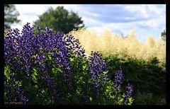 Quebec Flowers