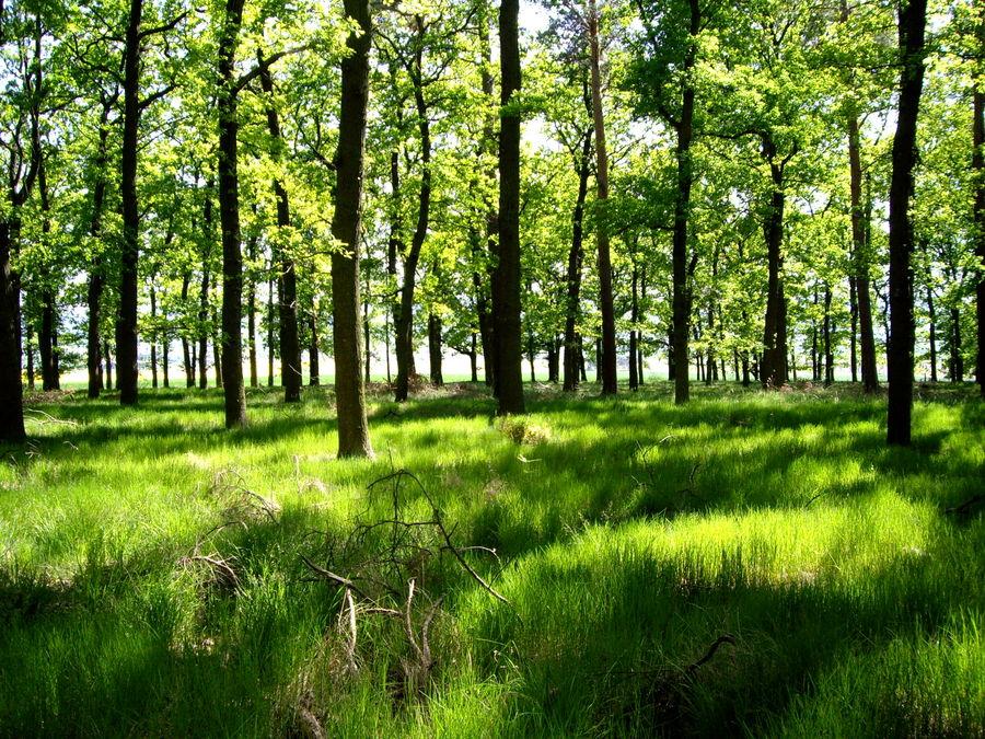 quedlinburg und die natur