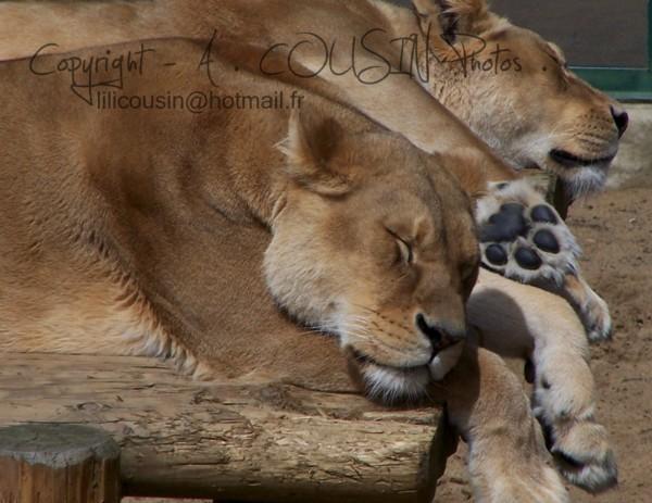 Queens Sleep.