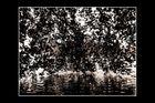 Quei rami sul lago di Bled(spring version)