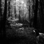 Quella casa nel bosco...