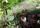 Quelques fleurs 2