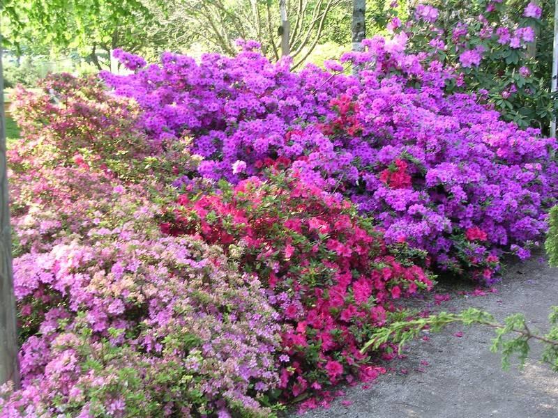 Quelques fleurs au détour d'une allée