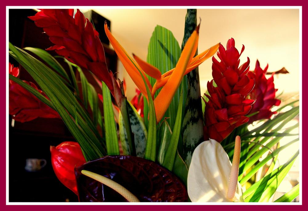 Quelques Fleurs De L Ile De La Reunion Photo Et Image Fleurs