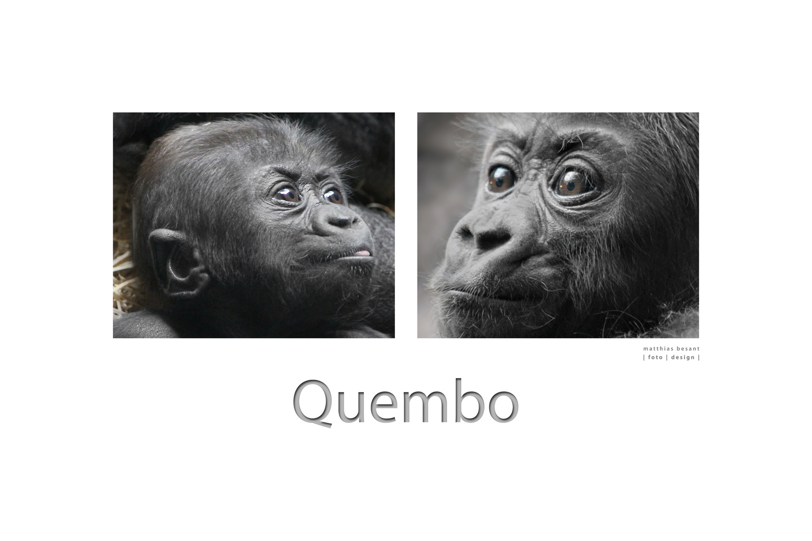 QUEMBO-COLLAGE II