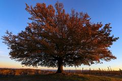 quercia d'inverno (2)