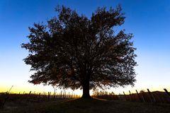 quercia d'inverno (3) - controluce
