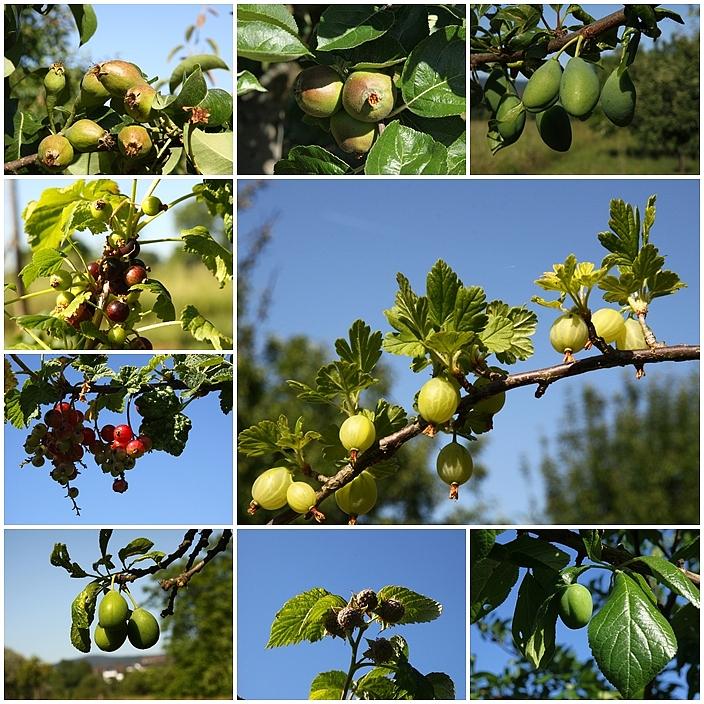 Querschnitt durch meinen Obstgarten