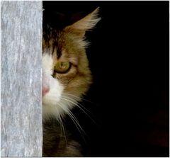 *qu'est ce que c'est que chat !! *