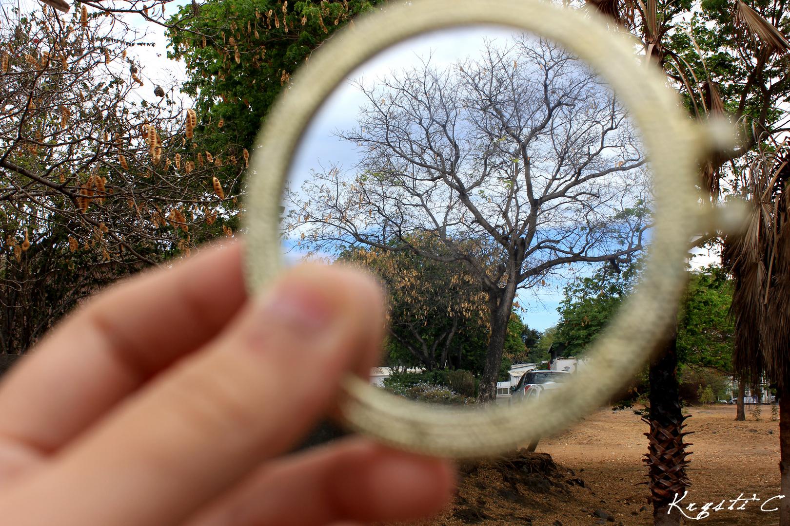 Qu'est ce que tu vois?