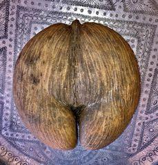 Questa è una zucca !?!!!
