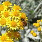 """Queste api non fanno un po' """"tenerezza"""""""