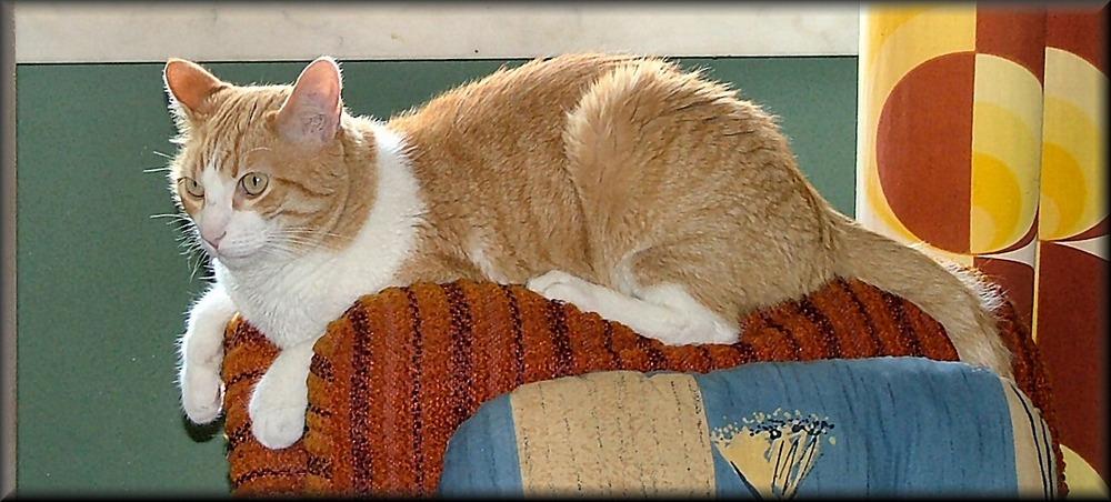 Questo divano è mio. This couch is mine.