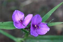 ..Qui peux me donner le nom de cette fleur ?