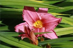 ..Qui peux me donner le nom de cette fleur ?...Merci..