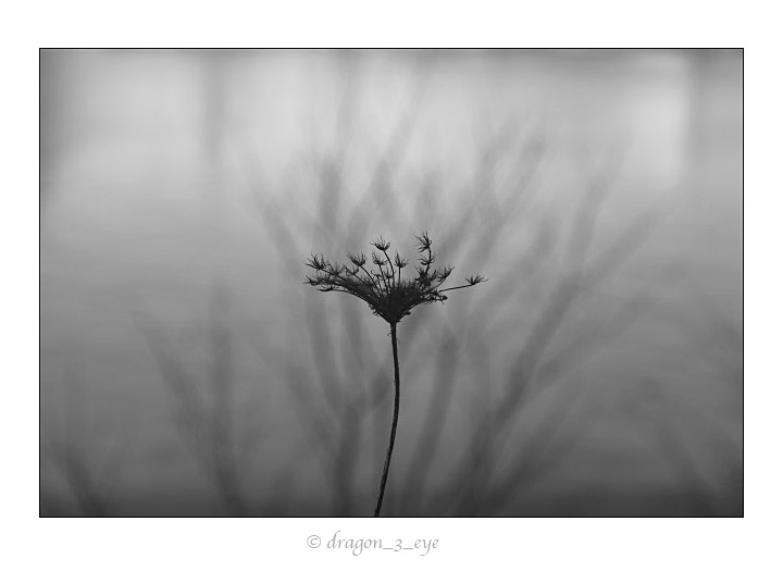 Quiet Seeds 3