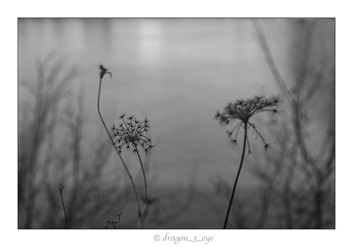Quiet Seeds 6